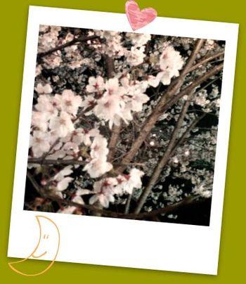 津階楽公園の夜桜|MieBiz,三重のお仕事